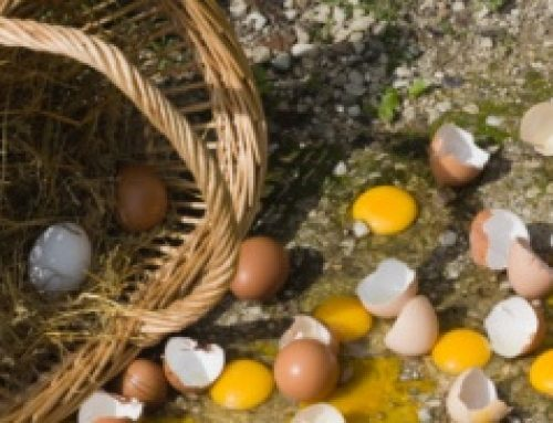 All Our Eggs in One Basket!